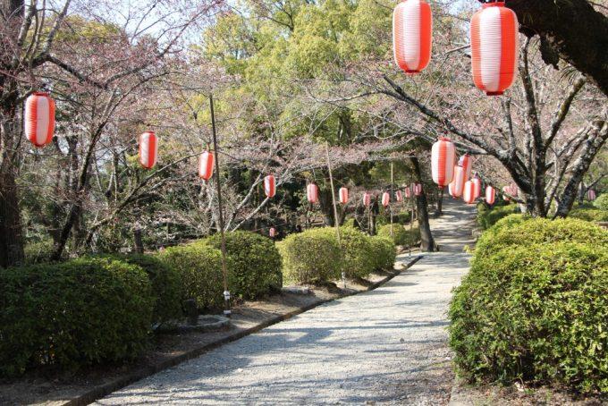 お花見シーズン到来!池田市、五月山公園へおでかけ。
