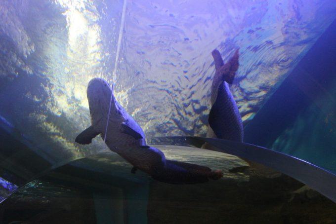 お魚も、遊園地も!ふれあいイベントもある、神戸市立須磨海浜水族園