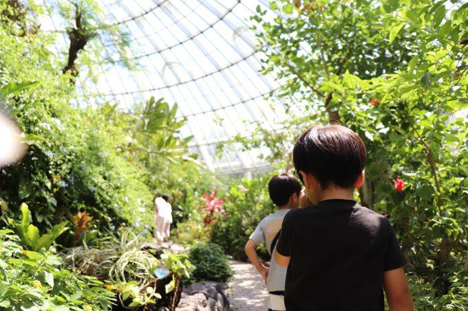 リニューアルオープン!西日本最大級のチョウ温室がある、「伊丹市昆虫館」へ子どもとおでかけ。